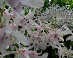Fotos: Orquídeas no Jardim Botânico de Singapura